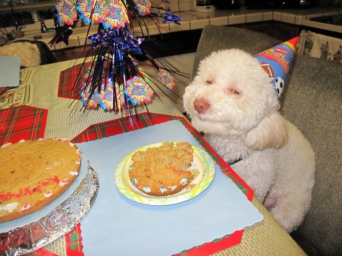 Surprising Birthday Dog Know Your Meme Funny Birthday Cards Online Inifodamsfinfo