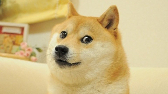 Doge Know Your Meme