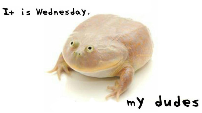 Image result for it is wednesday my dudes