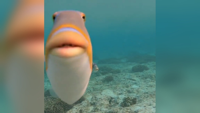 Staring Fish Do You Fart Know Your Meme